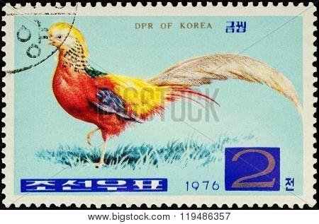 Golden Pheasant (chrysolophus Pictus) On Postage Stamp