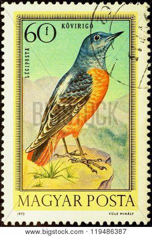 Catbird (monticola Saxatilis) On Postage Stamp