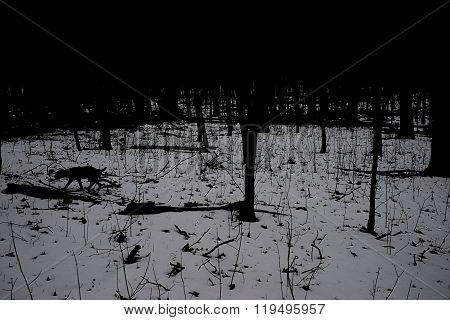 Dog prowling in dark woods
