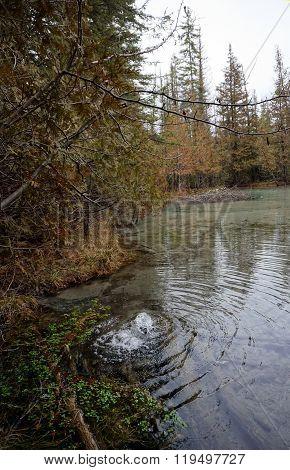 Artesian Spring in a Swamp