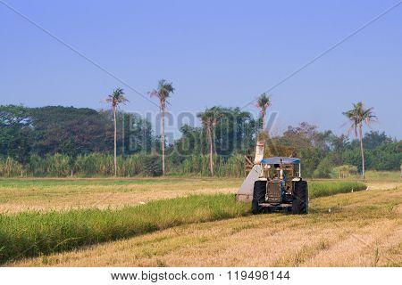 Harvester machine to harvest rice field working. Combine harvester agriculture machine harvesting ri