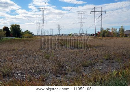Power Lines Over a Soybean Field