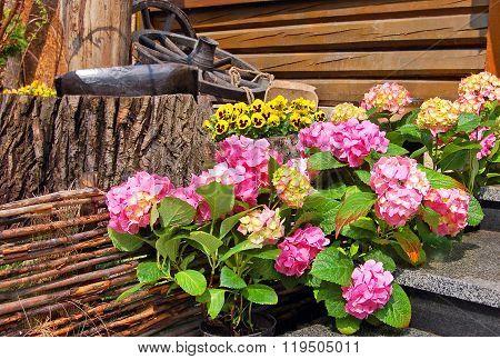 Hydrangea Blossom And Pansy (viola Tricolor)