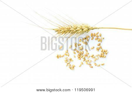 Ripened wheat ear and grains