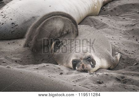 Sea Lion At Beach
