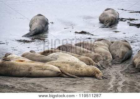 Sea Lions At Beach