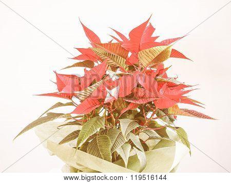Retro Looking Poinsettia Christmas Star