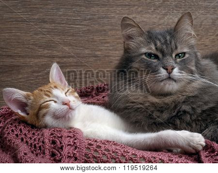 Cat and kitten