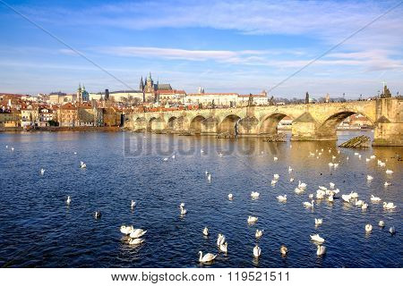 Charles Bridge And Prague Castle With Doves In The River