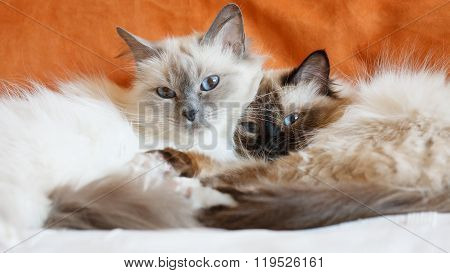 Two cute cats sleeping laying on bed close to each other