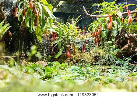 Carnivorous Plants And Pond In Greenhouse