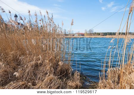 Reeded Lake Shore Ostersee Near Iffeldorf, Bavaria