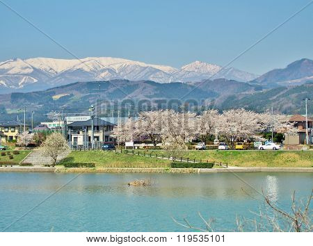 cherry blossoms and the mountain in Miyagi, Japan.