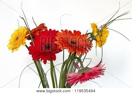 Gerberas On A White Background