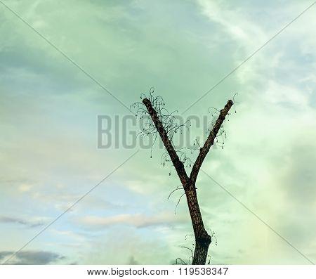 Tree In Shape Of Y