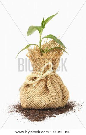 Junge Pflanzen in Tasche
