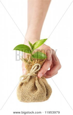 Holding young plant