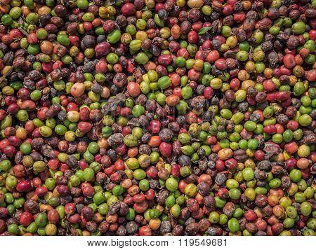 Fresh Coffee Beans Before Roast.