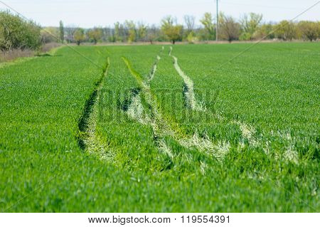 Green Field With Tractor Tracks
