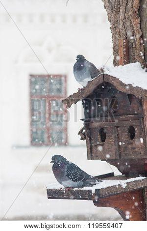 Feeder With Birds. Winter