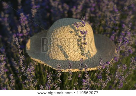 Lavender In A Hat