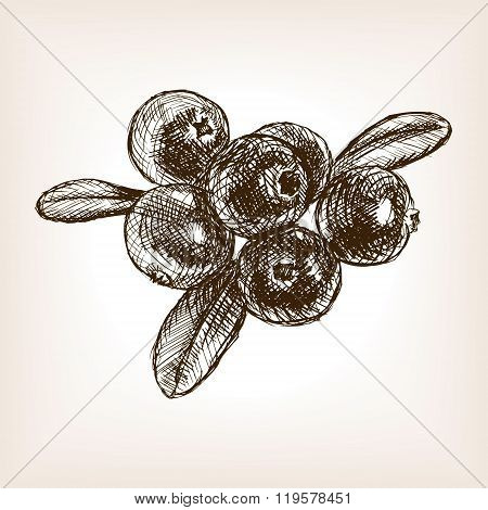 Cranberry berry fruit hand drawn sketch vector