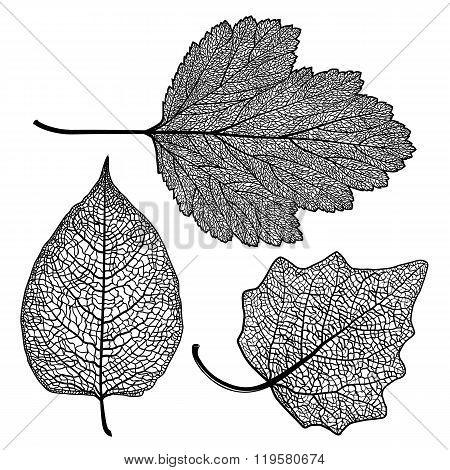Set Skeletonized Leaves