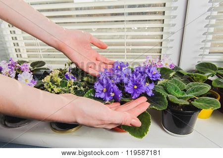 Female Hand Takes Care Of The Flowers