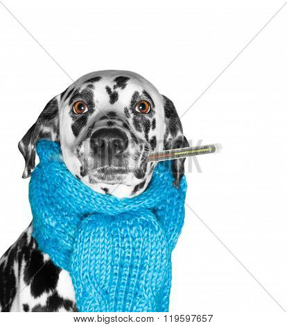 A Dog Is Sick, And Measures The Temperature