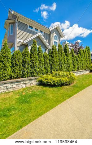 Plants in front of the house, front yard. Landscape design.