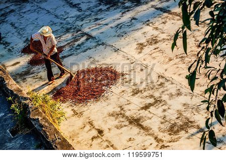 Drying Cacao Beans In Guatemala