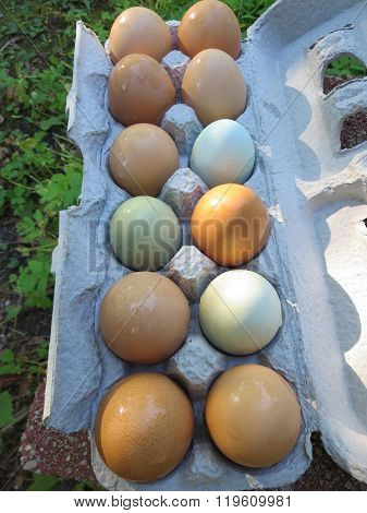 Eggs Colored by Chickens