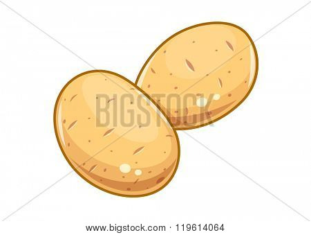 Potatoes vector illustration. Isolated white background. Transparent objects used for lights and shadows drawing