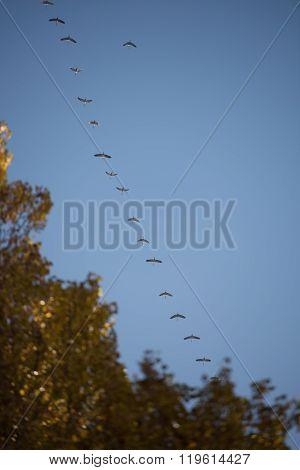 Cranes In Sky
