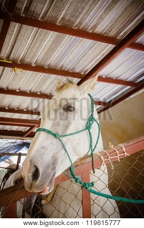 Portrait Of A Horse In Stable