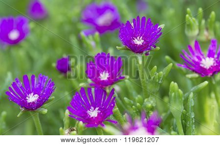 Macro Of A Small Purple Flower With Green Background