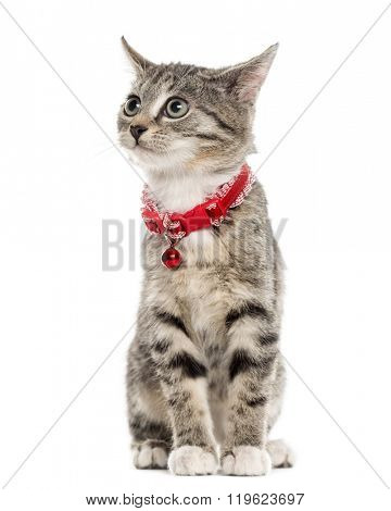 European Shorthair kitten sitting and looking away, isolated on white (2,5 months old)