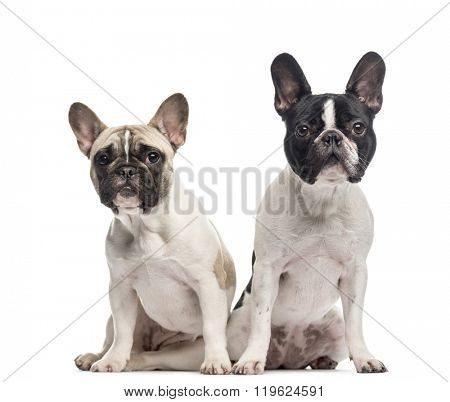 Couple of French Bulldogs (10 and 18 months old) sitting and looking at the camera, isolated on white