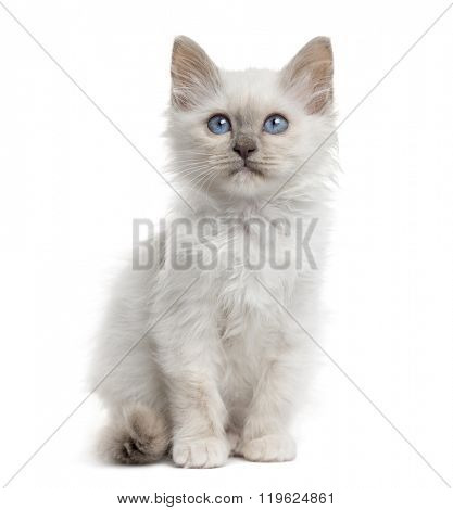 Front view of a Birman kitten sitting, isolated on white (3 months old)