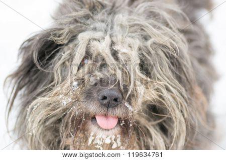 dog white anima
