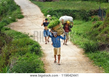 Indonesian Men Carry Basket And Bag Of Grass On The Road In Tana Toraja