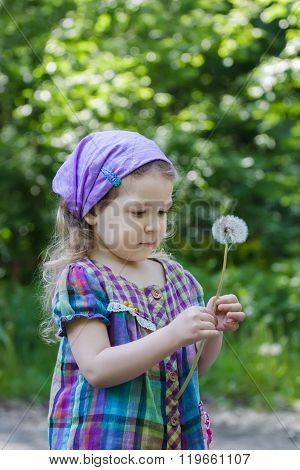 Little blonde girl looking at white puffy dandelion seed head at her hand