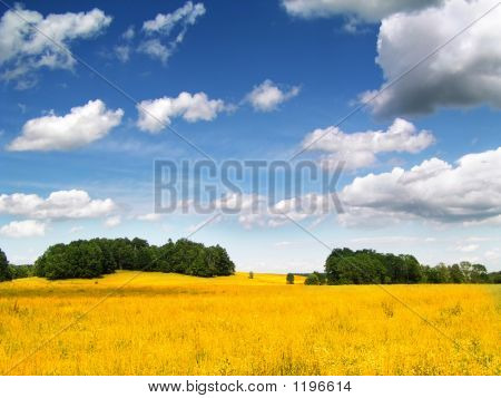 Golden Corn Field
