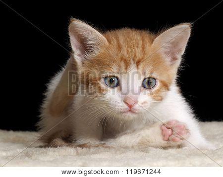 Kitten young, cute