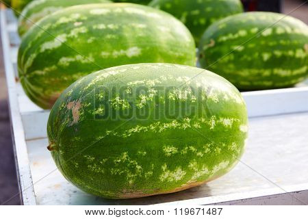 Watermelons in a marketplace in a row at Spain
