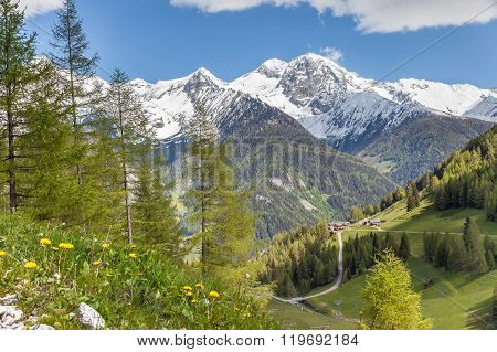 Mountain Pasture And Snow-capped Mountains