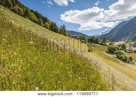 Flower Meadow In South Tyrol