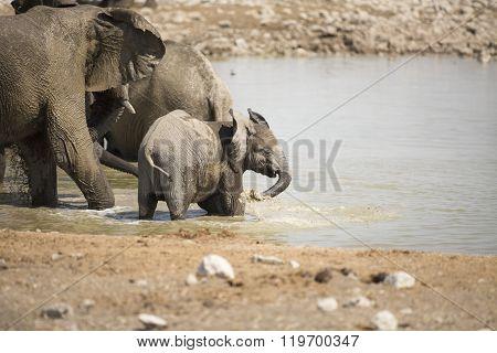 Elephant at the Okaukuejo water hole in Etosha National Park.