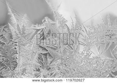 Winter Ice Patterns On Window