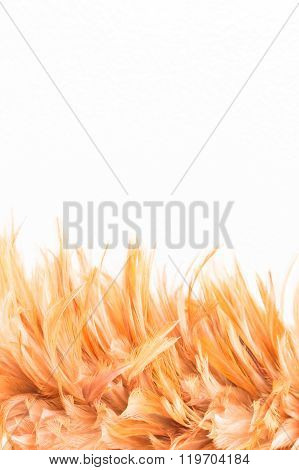 Feather duster on yellow concrete wall background